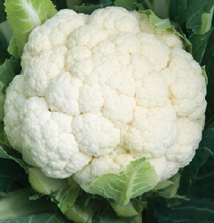 Cauliflower Denali